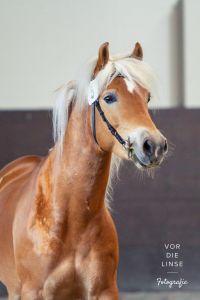 2020 02 29 HK Mustang 098